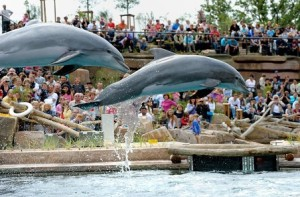 legoland-a-delfini-laguna